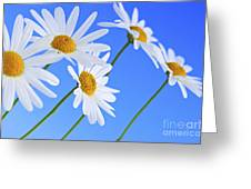 Daisy Flowers On Blue Background Greeting Card by Elena Elisseeva