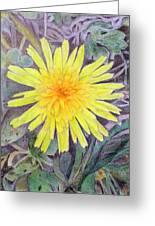 Dandelion Greeting Card by Linda Pope