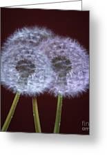Dandelions Greeting Card by Donald Davis