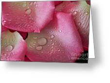 Dew Drops Greeting Card by Tracy  Hall