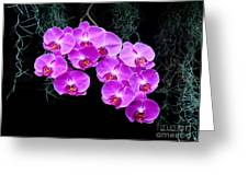 Dew-kissed Orchids Greeting Card by Sue Melvin
