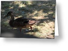 Duck - Animal - 011312 Greeting Card by DC Photographer