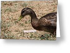 Duck - Animal - 011315 Greeting Card by DC Photographer