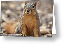 Eastern Fox Squirrel Greeting Card by Brandon Alms