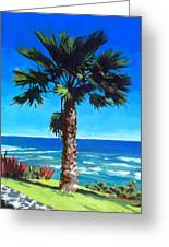 Fan Palm - Diamond Head Greeting Card by Douglas Simonson