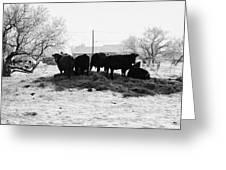 feed and fresh grass laid out for cows on winter farmland Forget Saskatchewan Canada Greeting Card by Joe Fox