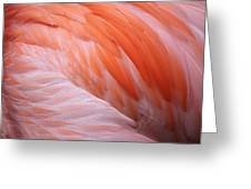 Flamingo Feathers Greeting Card by Paulette Thomas