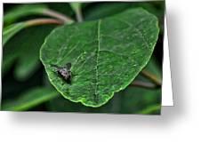 Fly On Leaf Greeting Card by Jeffrey Platt