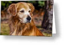 Golden Retriever Greeting Card by Laird Roberts