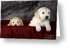 Golden Retriever Puppies Greeting Card by Angel  Tarantella