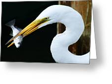 Great Catch Greeting Card by Paulette Thomas