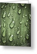 Green Leaf Abstract With Raindrops Greeting Card by Elena Elisseeva