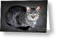 Grey Cat Portrait Greeting Card by Elena Elisseeva