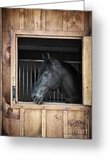 Horse In Stable Greeting Card by Elena Elisseeva