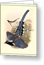 John Gould Birds Greeting Card by Gary Grayson