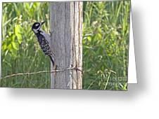 Juvenile Hairy Woodpecker Greeting Card by Linda Freshwaters Arndt