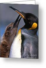 King Penguin With Chick Greeting Card by Art Wolfe