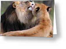 Kiss Greeting Card by Helen Akerstrom Photography