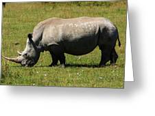Lake Nakuru White Rhinoceros Greeting Card by Aidan Moran