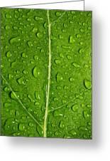 Leaf Dew Drop Number 12 Greeting Card by Steve Gadomski