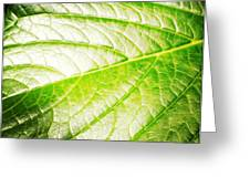 Leaf Greeting Card by Les Cunliffe