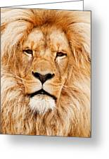 Lion Portrait Greeting Card by Tilen Hrovatic