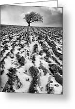 Lone Tree Greeting Card by John Farnan
