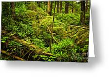 Lush Temperate Rainforest Greeting Card by Elena Elisseeva