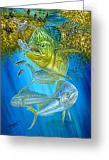 Mahi Mahi Hunting In Sargassum Greeting Card by Terry  Fox