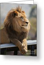 Majestic Lion Greeting Card by Sharon Foster