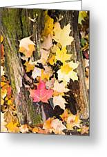 Maple Leaves Greeting Card by Steven Ralser