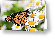Monarch Butterfly Greeting Card by Elena Elisseeva