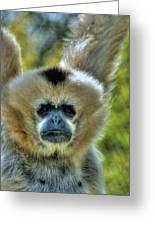 Monkey Greeting Card by Bryan Hanson
