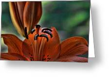 Orange Lilly Greeting Card by Saija  Lehtonen