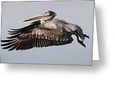 Pelican In Flight Greeting Card by Paulette Thomas