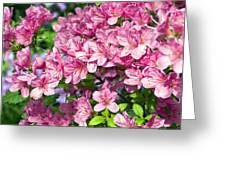 Pink And Blue Rhododendron Greeting Card by Frank Tschakert