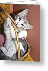 Playful Kitten Greeting Card by Susan Leggett