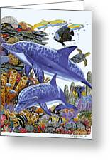 Porpoise Reef Greeting Card by Carey Chen