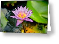 Purple Lotus  Greeting Card by Raimond Klavins