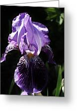 Purple Majesty Greeting Card by Bruce Bley