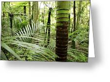 Rainforest  Greeting Card by Les Cunliffe