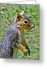 Red Squirrel Greeting Card by Bob and Nadine Johnston