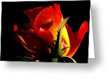 Rising Rose Greeting Card by Camille Lopez