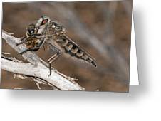 Robber Fly And Prey Greeting Card by Science Photo Library