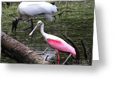 Roseate Spoonbill Greeting Card by Theresa Willingham