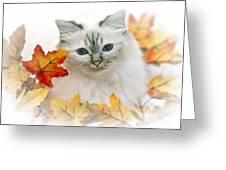Sacred Cat Of Burma Greeting Card by Melanie Viola