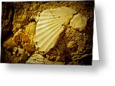 Seashell In Stone Greeting Card by Raimond Klavins