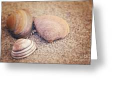 Shells  Greeting Card by HJBH Photography