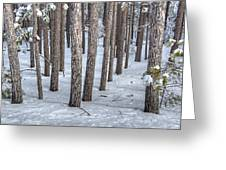 Snowy Woods Greeting Card by Donna Doherty