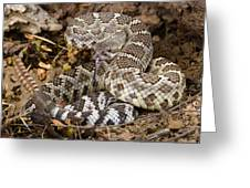 Southern Pacific Rattlesnake. Greeting Card by John Bell